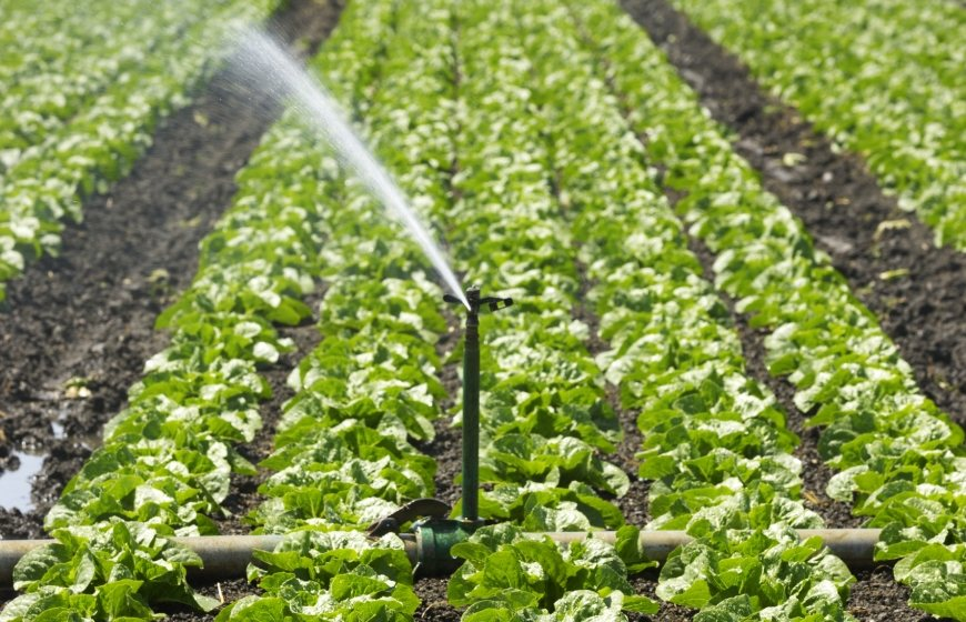 Irrigation and agriculture