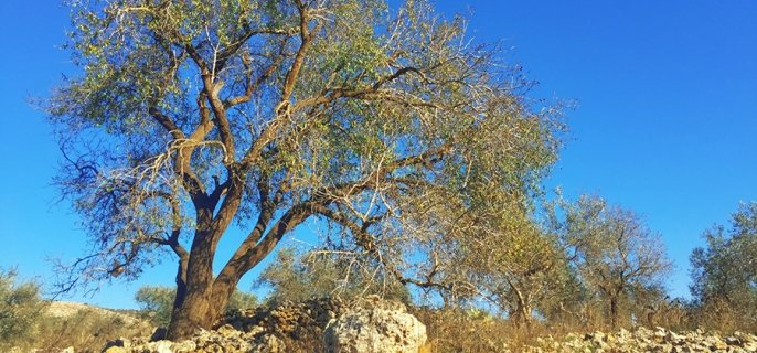 Photo of a tree in an arid region.